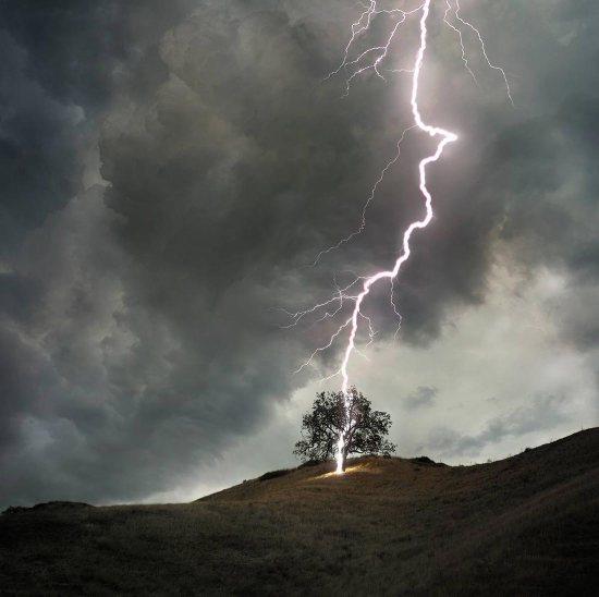 LIGHTNING-TREE-A